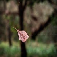fall by geissa