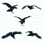 Crow Stock Pack 3 by Shoofly-Stock
