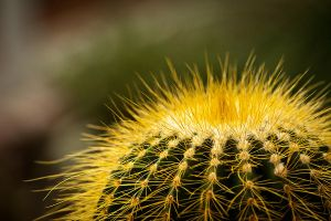 Cactus 2 by mairlin