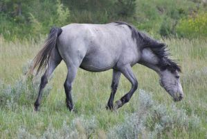 Wild Mare by ArtistStock