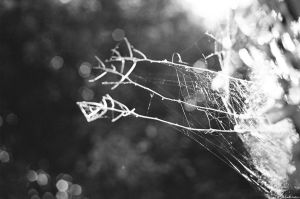 soft web by Picture-Bandit