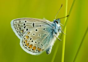 butterfly 2 by decmeister