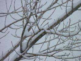 Snow Branches by LW-Lucy