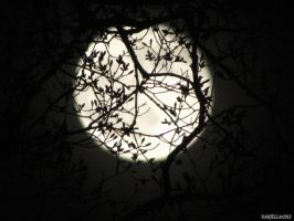 Melodic Moon by Anj3lla