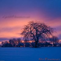 Sunrise Over My Tree II by allym007