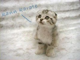 Karate Cat by denise-g