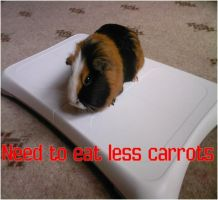 Honey guinea-pig on wii fit by IceyDragoness
