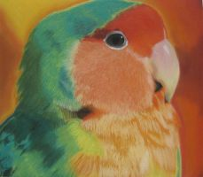 Lovebird Chalk Drawing by DeathByDarkness