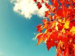 Autumn by Idealist-Teen