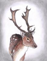 Fallow Buck by The-Darkwolf