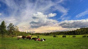 Summer Countryside by Pajunen