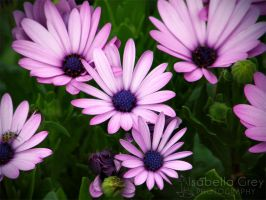 Purple Flowers by Emagyne