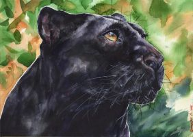 Panther by GeorgeArt23