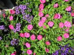 Pink and Purple Pleasant Flowers by Dygyt-Alice
