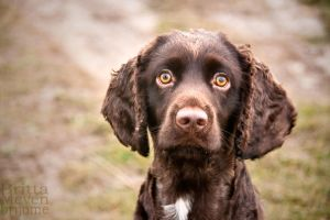 Dog in UK1 by brijome