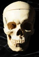 Human Skull front view by Meddling-With-Nature