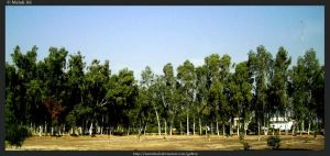 Scenery full of Greenery by SMehdiAli