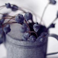 blue berries by LenaCramer