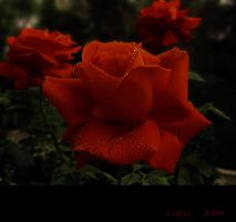 Passione - Red by Callu