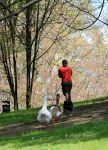 Walking with the ducks... by annamnt