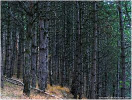 Pine Border by eMBeeL
