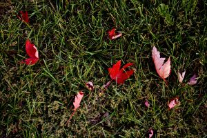 Scattered Autumn Leaves by Andrew-Bowermaster