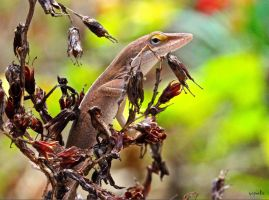 Winter's Anole by FallOut99