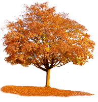 765 Autumn Tree by Tigers-stock