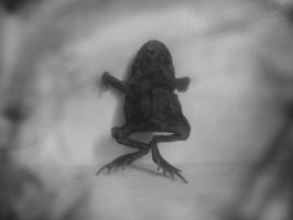STOCK IMAGE dead frog by LamollesseStockImage