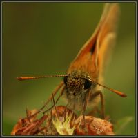 Butterfly face by polag13