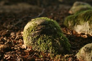 forest root of a tree with moss 02 by Nexu4
