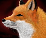 Fox by snoday