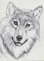 Small Sketch: Wolf by JacquelineChroma