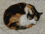 Allie Cat Asleep On Our Bed by boblea
