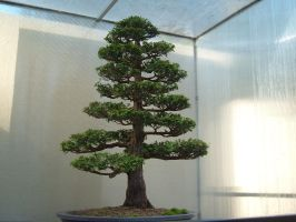 Bonsai 007 by aurochstock