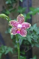 Orchid by CASPER1830