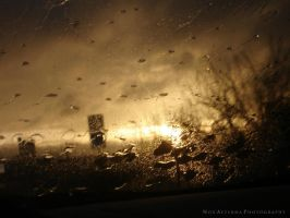 Through Rain of Gold III by BlackLux
