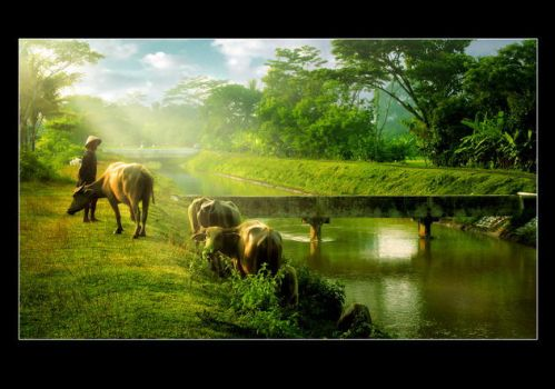 The green of Yogyakarta by pagihari