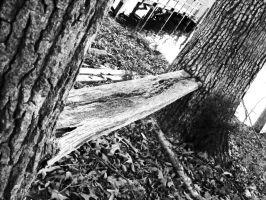 Tree Bench by JeremyC-Photography