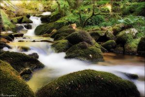 Stream by FlorentCourty