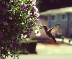 Hummingbird by SoraBelle