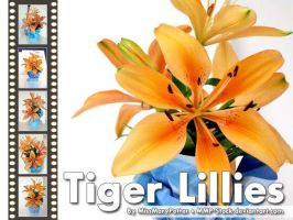 Tiger Lilies 6 Pack by mmp-stock