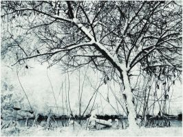 A Tree In Snow by Amalus