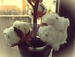 Cotton by EmaCarciu