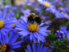 Busy Bee by foreverintheshadows3