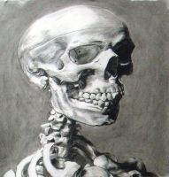 skull study rendering by HeribertoMartinez