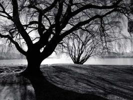 Black trees by Anthraxdeathrider