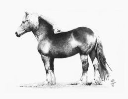 Belgian Draft Horse by NorthumbrianArtist