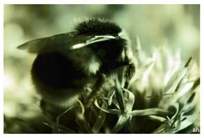 Bumble Bee Feeding by GeminiArtNStock