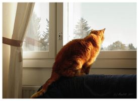 Watching out the window by Mandi98